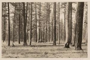 Weislander Photo BMEF 1931crop